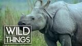 Armour Plated Rhino Rhino Documentary Wild Things