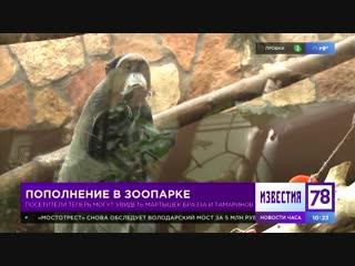 Пополнение в Ленинградском зоопарке