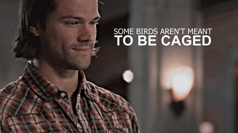 Sam winchester | some birds aren't meant to be caged