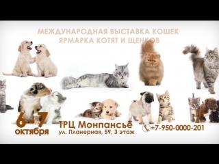 Выставка кошек Монпансье 6-7 октября