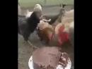 катя екатерина с днем рождения