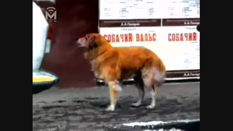 Лицей - Рыжий пёс