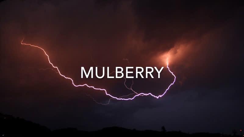 Mulberry - Coast