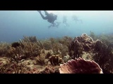Fathers Day Dive1 2018 - Ron's Reef - Palm Beach, FL