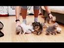 Как сфотографировать 10 котят ) (360p).mp4