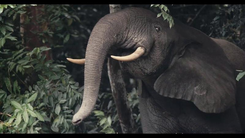 I am Congo - L'éveil de la nature