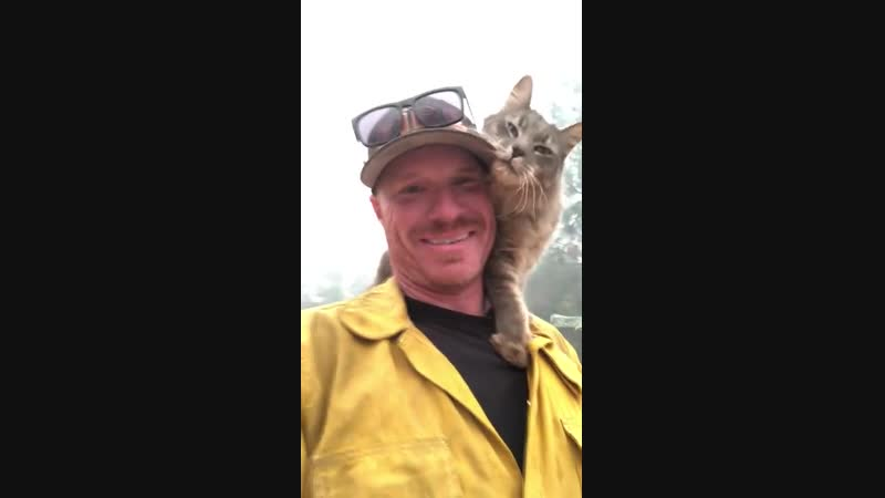 Cat Rescued From Paradise Fires Perches on Fireman -- ViralHog