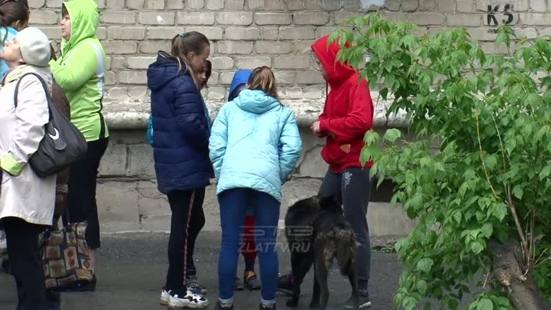 В Златоусте бродячие собаки напали на 8-летнюю девочку