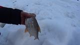 На рыбалку с веселой компанией! р.Касть февраль.