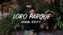 Тенерифе Лоро Парк Lori Parque