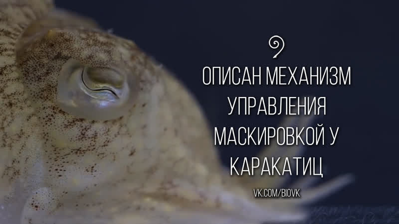 Elucidating the control and development of skin patterning in cuttlefish