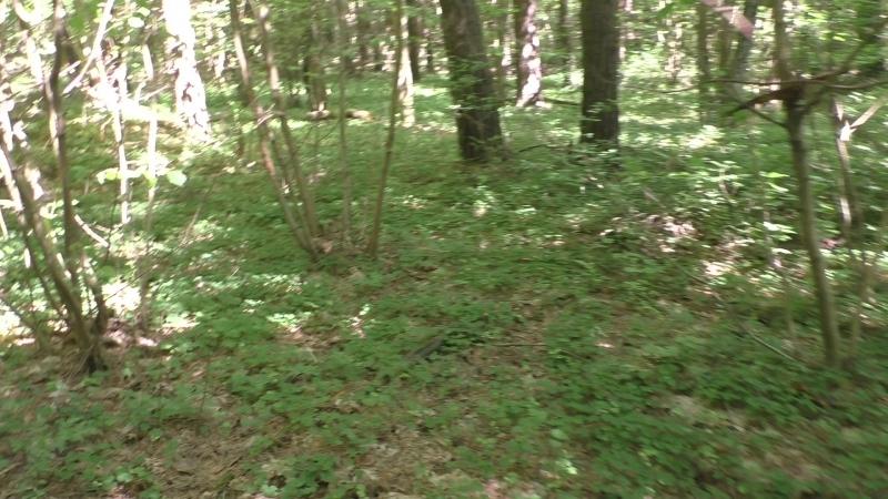 Сморгонь. Лес-10 (Арт. поз.). Блиндажи в юго-зап. части леса