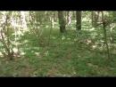 Сморгонь Лес 10 Арт поз Блиндажи в юго зап части леса