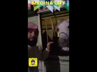 جلسة مدينية في مربط البراق للخيل والفروسية وكلمة لأهل المدينة المنورة من الداعية عبد الله بانعمة
