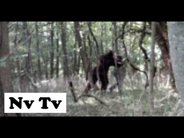 INCREDIBLE DRONE CAM FILMS REAL BIGFOOT SIGHTING CAUGHT ON VIDEO Ohio USA 2012 HD