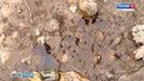 Режим ЧС изъято 36 кг зараженного ртутью грунта