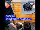 В Бурятии полицейские изъяли медвежат в отеле Россия 1