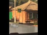 Собаки на Рабочей площади 24.8.2018 Ростов-на-Дону Главный