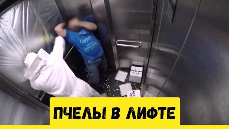 Прикол с пчелами в лифте