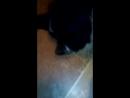 кот сосёт сиську у собаки