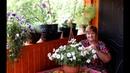 Моя Терраса Обзор Цветов Как Я Отдыхаю И Радуюсь Жизни
