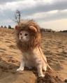 Simba #coub