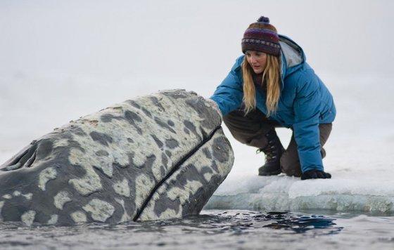 Видео к фильму Все любят китов 2012 Трейлер русский язык
