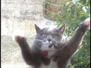 Is this cat dancing to DUBSTEP!?