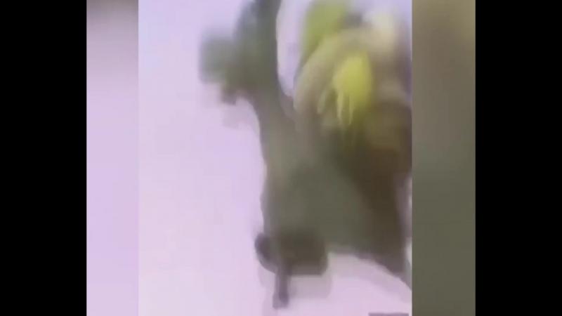 ебанутый шрек скачет на бедном осле помогите животине