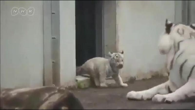 вышел котя погулять, решил маму напугать