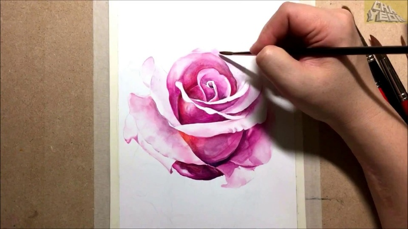 Watercolor painting of Pink rose 꽃 그리기 장미 수채화 그림