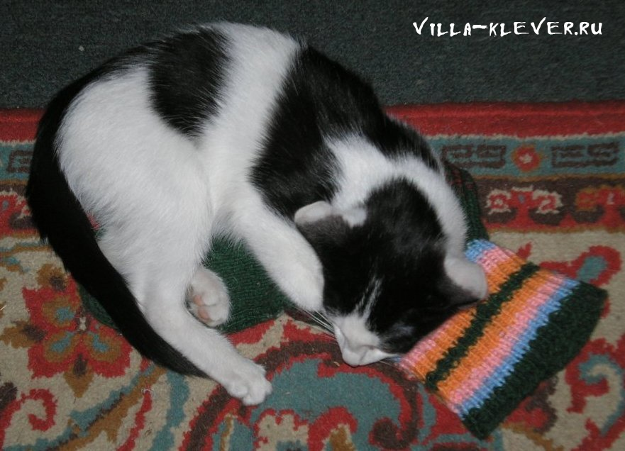 Про носки и котов