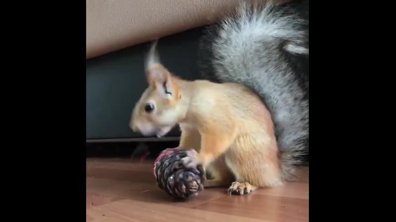 Соня и кедровый орех