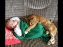 Смешные приколы с котами кот и младенец