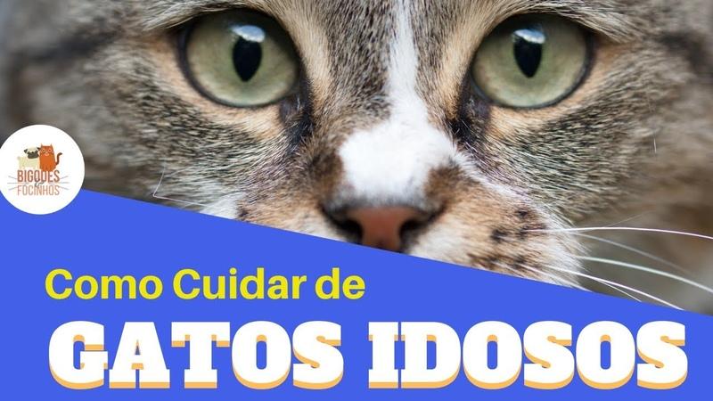 Gatos Idosos - Como Cuidar Com Amor