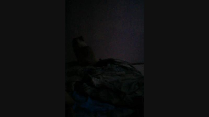 ночька