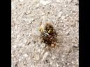 Борьба за выживание оса и муха