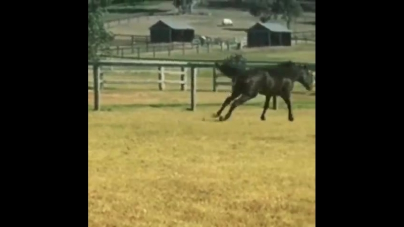 WINX is clearly enjoying her time off, having a leisurely roll and frolicking with her mat