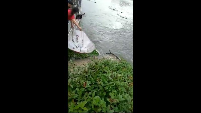 See how fishing gurus catch fish….