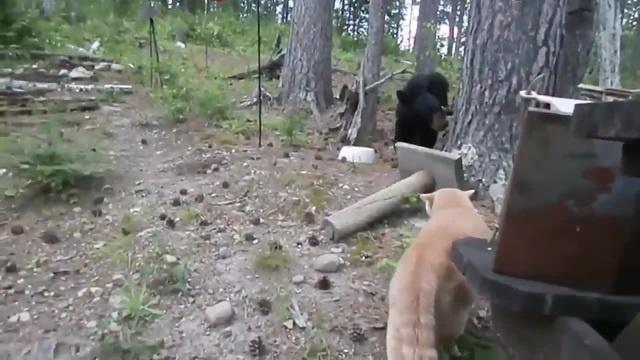 Мыши -для слабаков, давай медведя!