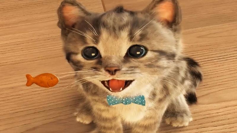 Poco Gatito Mi Gato Favorito Mascota Juegos de Cuidado - Jugar Gatito Juegos para Niños