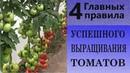 4 главных правила успешного выращивания томатов Исключаем основные ошибки выращивания томатов