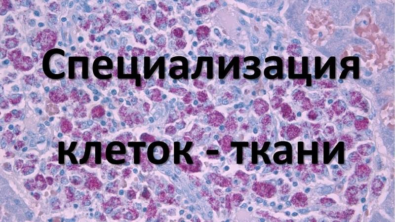 2 Ткани человека 8 класс биология подготовка к ЕГЭ и ОГЭ 2019