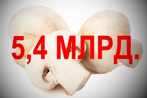 В Воронежской области откроют производство грибов за 5,4 млрд. рублей