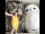 One Of These Owl's Is Not Like The Others