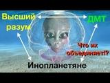 Рик Страссман о ДМТ и инопланетянах. Аяваска, Аяуаска, Ayahuasca, Буфо и Камбо.
