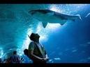 Oceanografic Aquarium Valencia 14