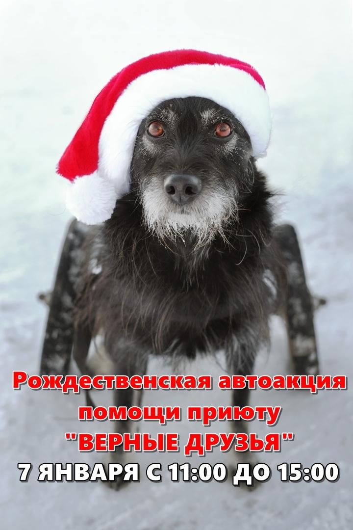 """Афиша Рождественская автоакция помощи """"Верным друзьям"""""""