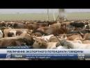 Алматинская область увеличивает экспорт говядины