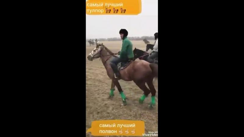 Құдірет Қожа Палуан